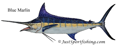 Blue Marlin picture