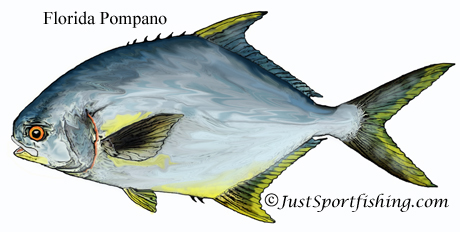 Florida Pompano illustration