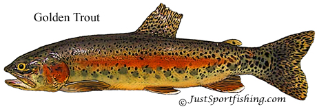 Golden Trout picture