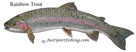Rainbow Trout picture