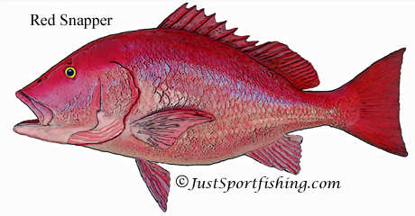How long to cook red snapper