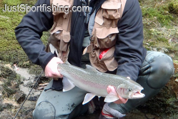 Photo of a fisherman holding a steelhead trout