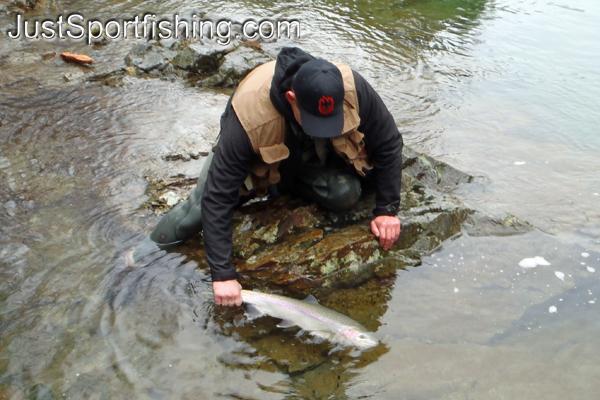 Fisherman releasing a steelhead trout